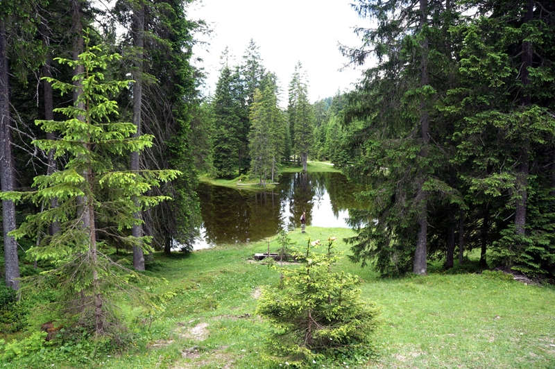 Wald Waldwiese See