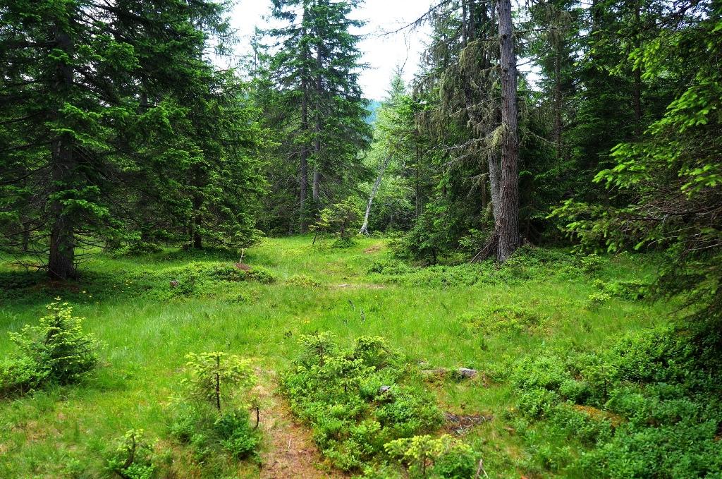 Wald Bäume