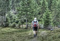Wanderer Senioren Wald