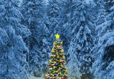Weihnachtsbaum im Wald Hochformat