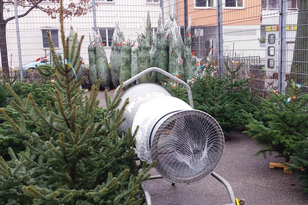Wann Weihnachtsbaum Kaufen Weihnachtsbaum kaufen   lizenzfreie Fotos / Bilder herunterladen
