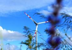 Windräder auf Wiese