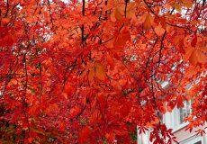 Wundervolle leuchtende Herbstfarben